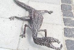 Zohar Gev Lizard